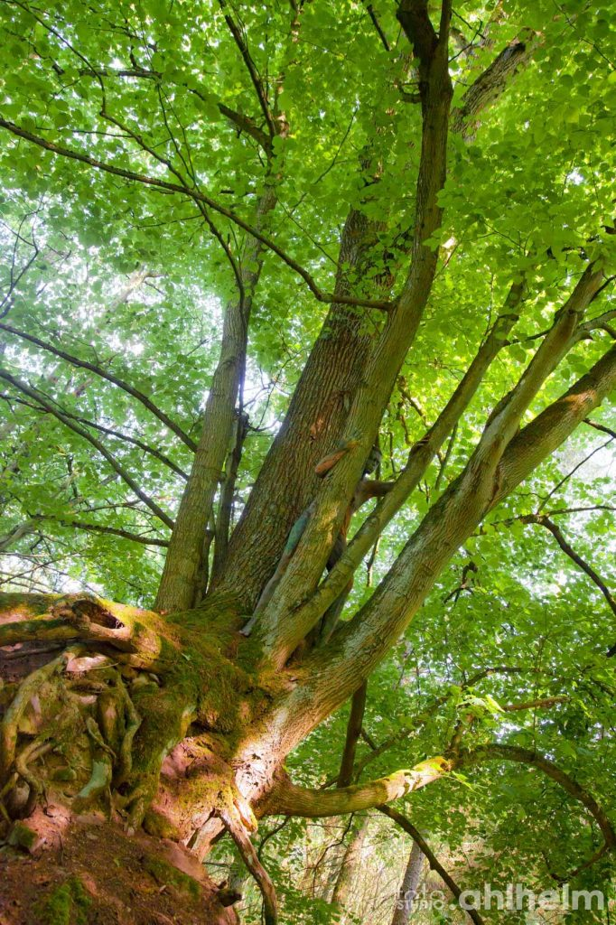 Fotostudio Ahlhelm Bodypainting Wald 9