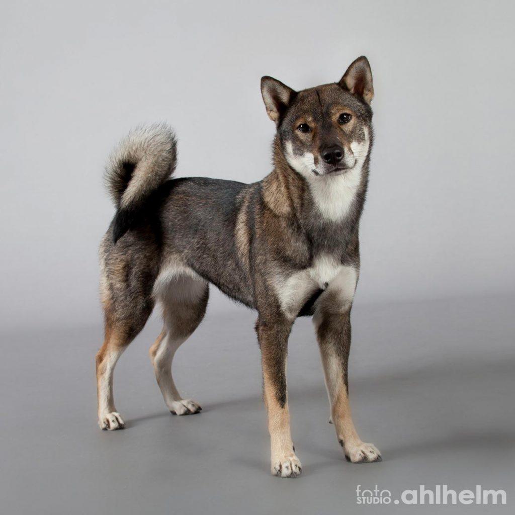 Fotostudio Ahlhelm Tiere Hund