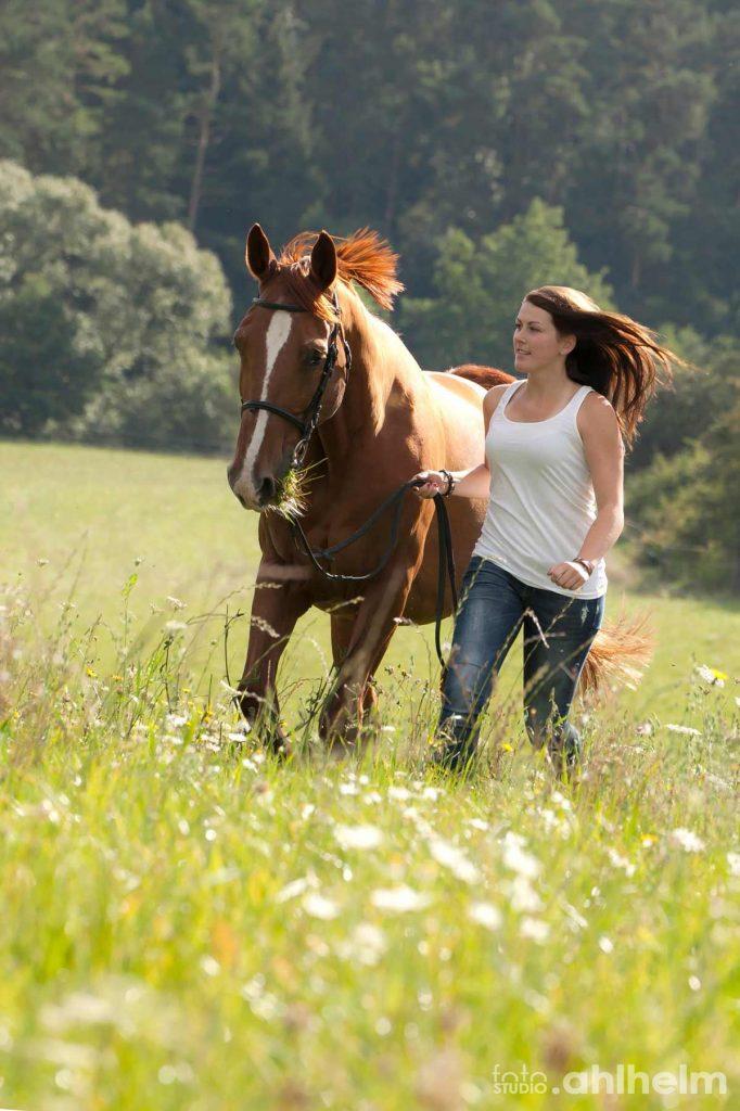 Fotostudio Ahlhelm Tiere Outdoor Pferd