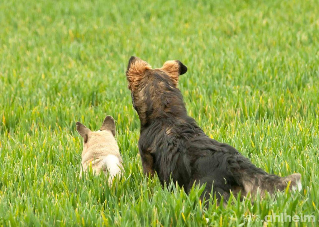 Fotostudio Ahlhelm Tiere Outdoor Hundefreunde