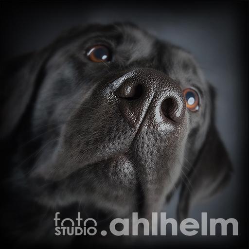Fotostudio Ahlhelm Tiere nahes Hundeportrait