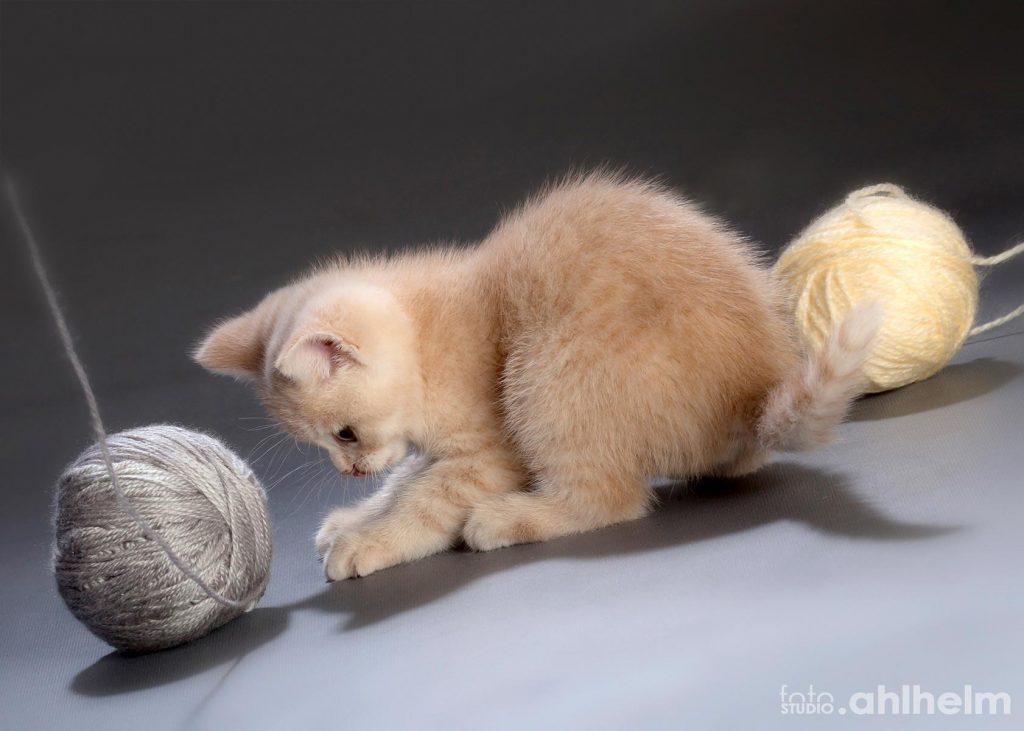 Fotostudio Ahlhelm Tiere spielendes Katzenbaby